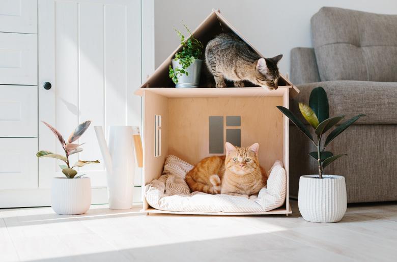 Casa de descanso para los gatos