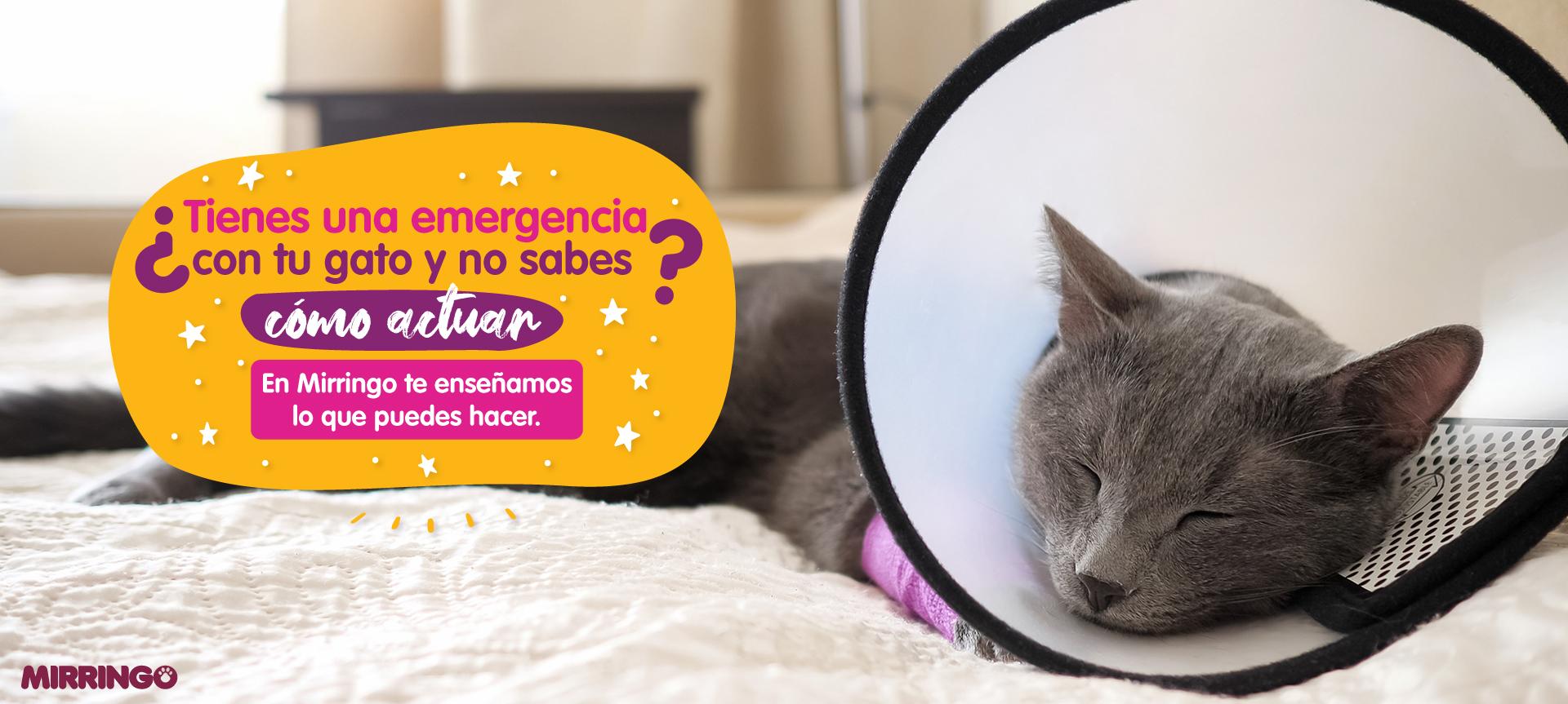 Primeros auxilios en gatos