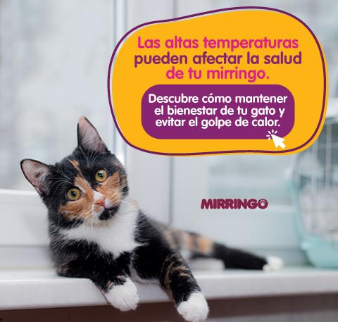Temperatura corporal en gatos