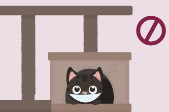 Los tapabocas pueden ser incómodos para tu gato