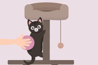 Si tu gato sale, no olvides limpiarlo cuando regrese