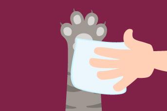 Limpia las patas del gato con paños húmedos