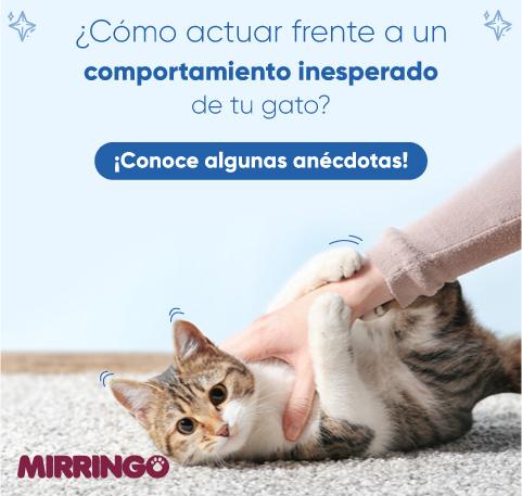 Comportamiento inesperado de tu gato