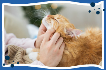 Beneficios de adoptar gato adulto